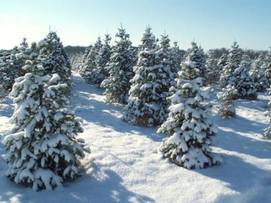 АРОПИ новогодняя елка.jpg